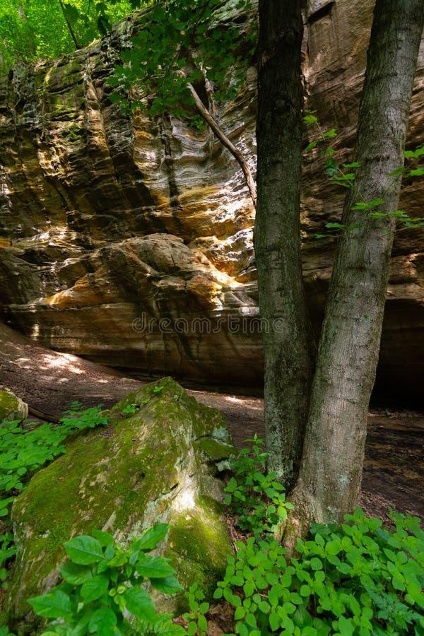 Kanjonväggar och träd fotografering för bildbyråer