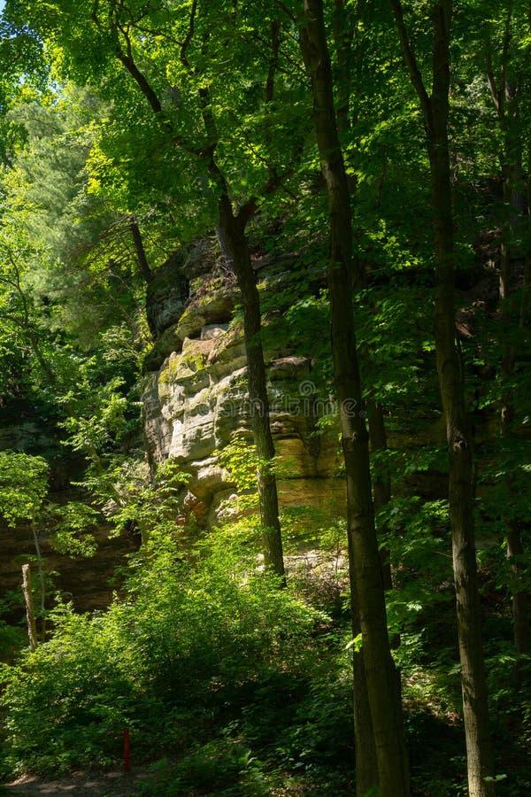 Kanjonväggar till och med träden royaltyfria bilder
