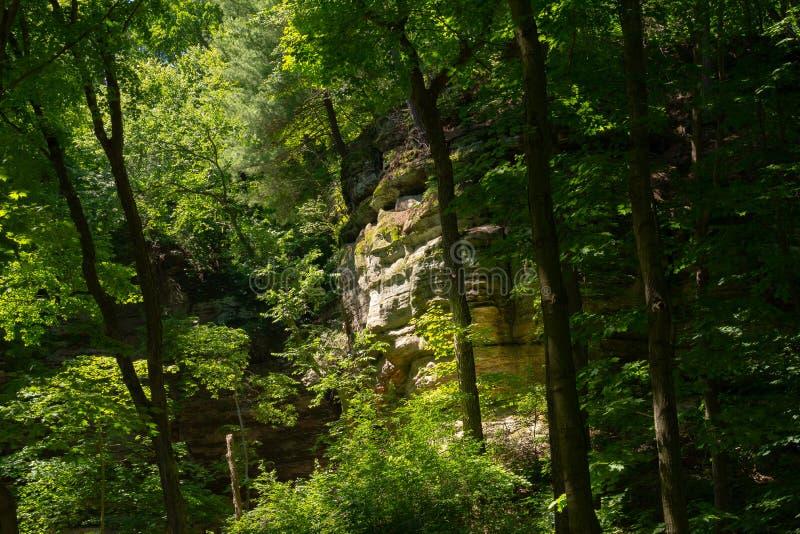 Kanjonväggar till och med träden arkivfoton