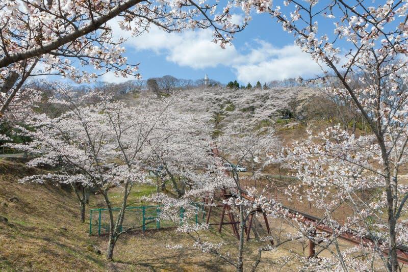The Kannon statue and Funaoka castle ruin park, Miyagi, Japan. The Kannon statue and full bloom cherry blossoms (Sakura) at Funaoka castle ruin park in Miyagi royalty free stock image