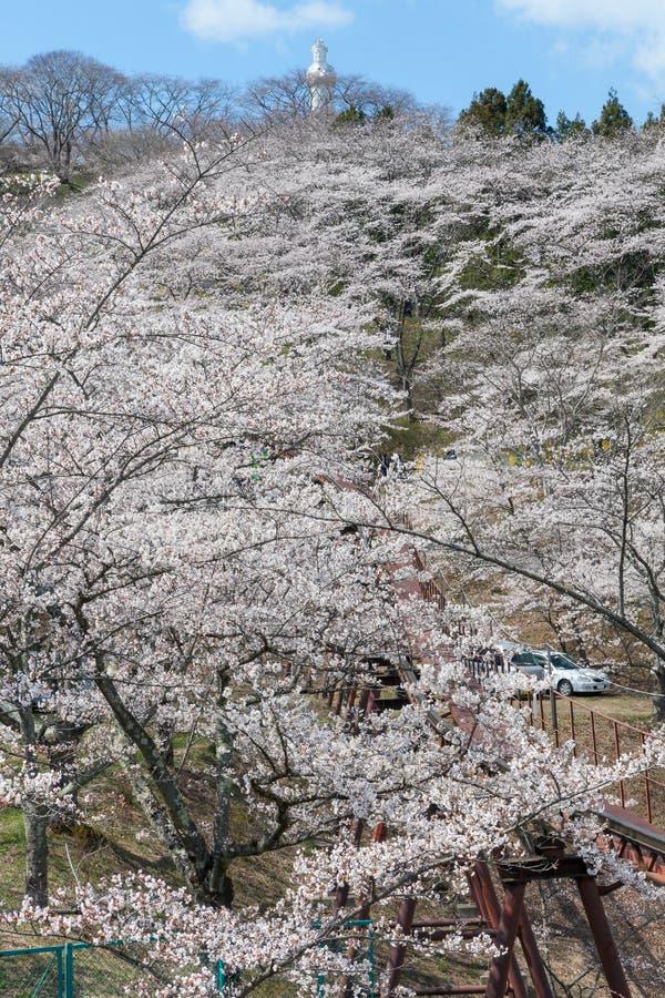 The Kannon statue and Funaoka castle ruin park, Miyagi, Japan. The Kannon statue and full bloom cherry blossoms (Sakura) at Funaoka castle ruin park in Miyagi stock photos