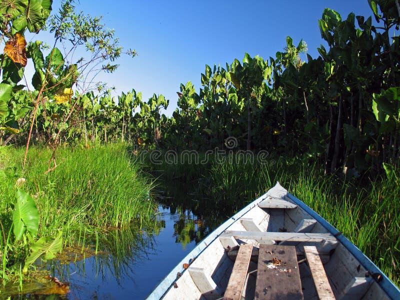 Kano in de vegetatie royalty-vrije stock afbeelding