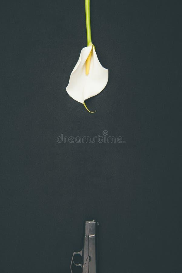 Kanon met witte calla bloem royalty-vrije stock foto's