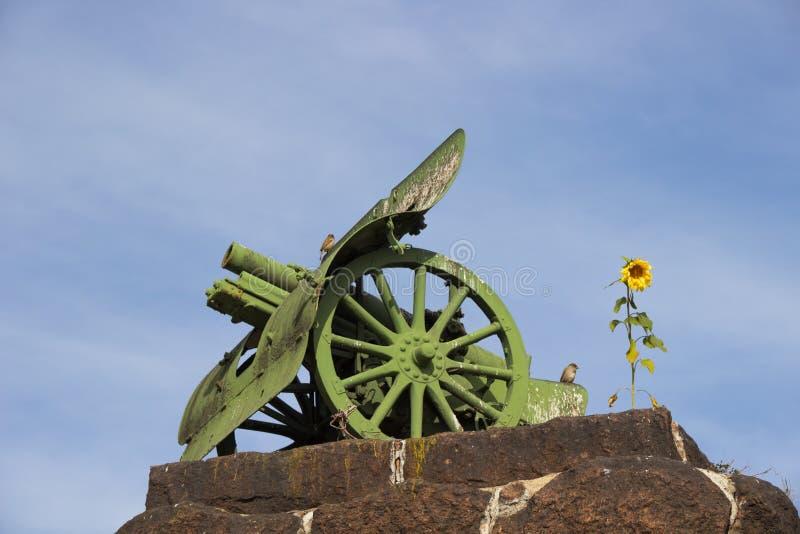 Kanone auf der Steinbasis sonnenblume lizenzfreie stockbilder