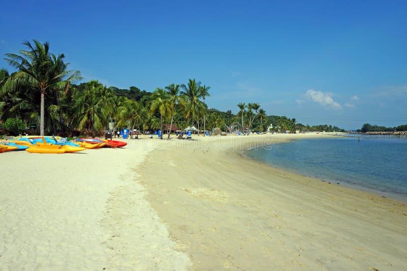 Kanoter och palmträd på den soliga stranden arkivbilder