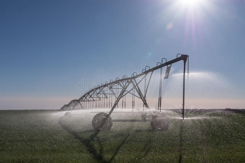 Kansas Sprinkler. A center pivot sprinkler waters thirsty Kansas wheat fields under a morning sun stock images