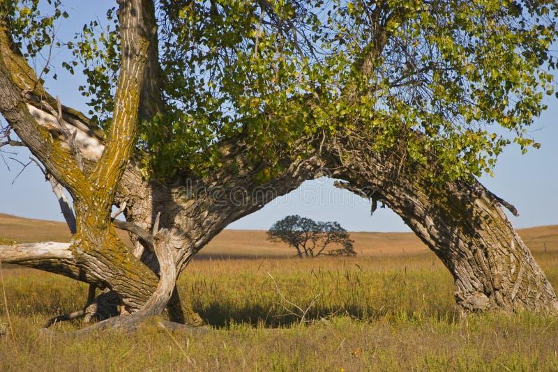 Kansas Tallgrass prezerwy Cottonwood Preryjny Preryjny łuk obraz royalty free