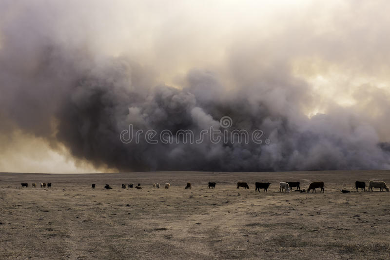 Kansas-Wiesen-verheerendes Feuer stockbild