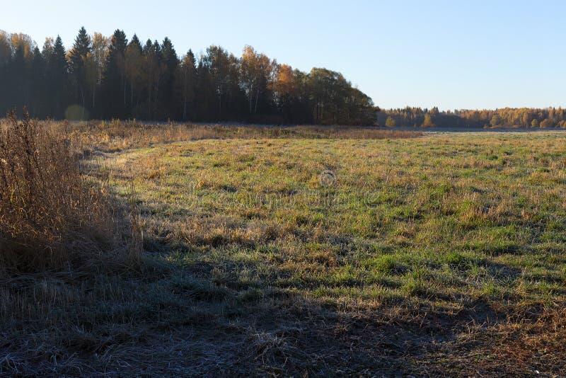Kant av det djupfrysta fältet och skogen, visset gräs i morgonsolen Guld- höst arkivbilder