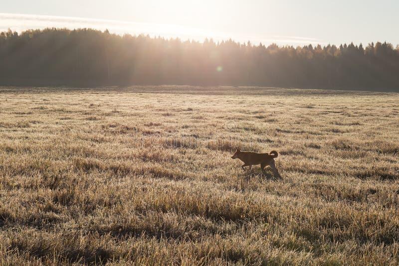 Kant av fältet och djupfryst gräs för skog på fältet i morgonsolen arkivfoton
