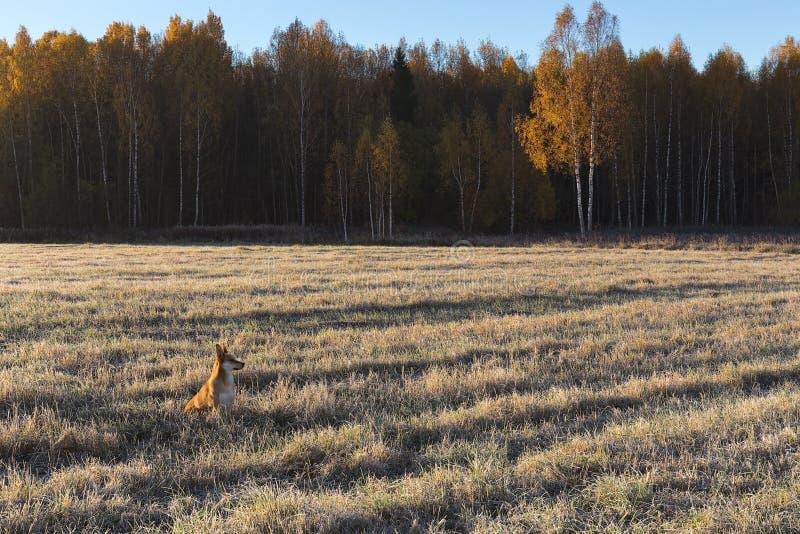 Kant av fältet och djupfryst gräs för skog på fältet i morgonsolen arkivbild