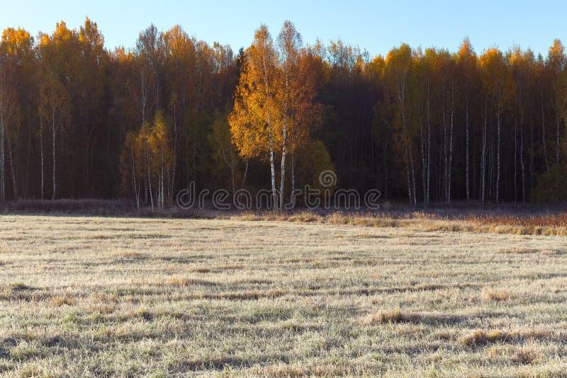 Kant av fältet och skog fryst gräs på fältet i frosten arkivbilder