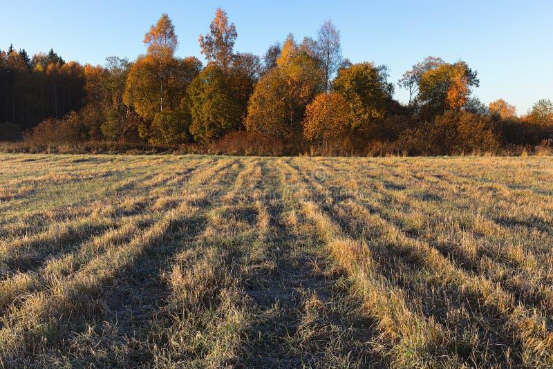 Kant av fältet och skog fryst gräs på fältet i frosten royaltyfri fotografi
