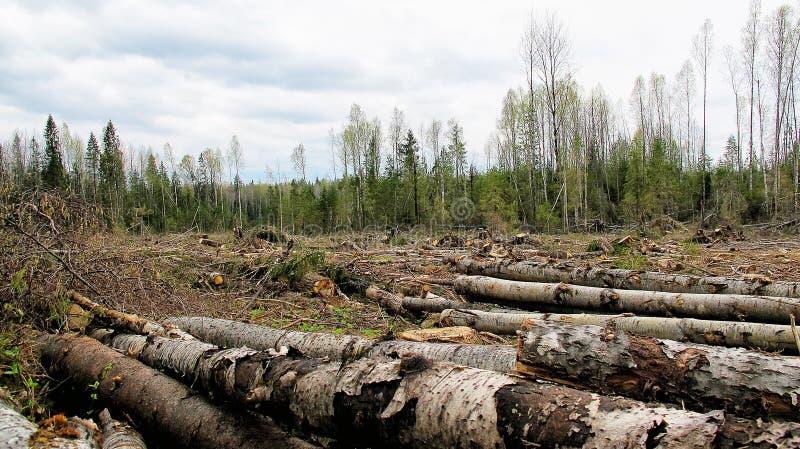 Kant av skogen efter skogsarbetare royaltyfri foto