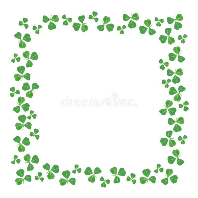 Kant för ram för dag för St Patricks fyrkantig av treklöverer över vit royaltyfri bild