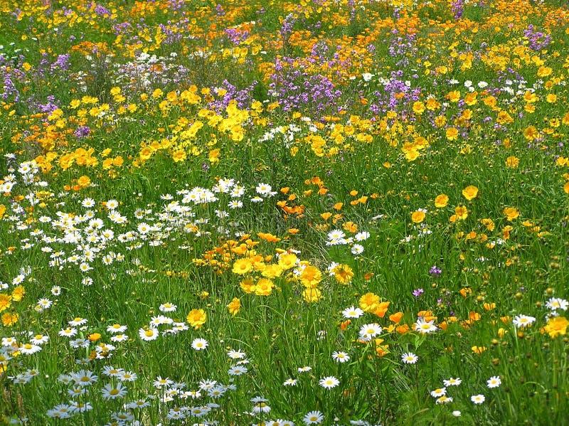 Kant van de weg Wildflowers royalty-vrije stock foto's