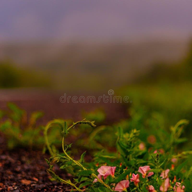 Kant van de weggras in regenachtig weer Grijze hemel, bos en mist royalty-vrije stock foto