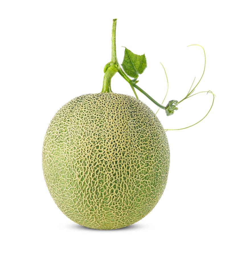 Kantalupa melon odizolowywaj?cy na bia?ym tle zdjęcie stock