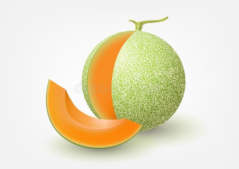 Kantalupa melon, owocowa wektorowa ilustracja ilustracja wektor