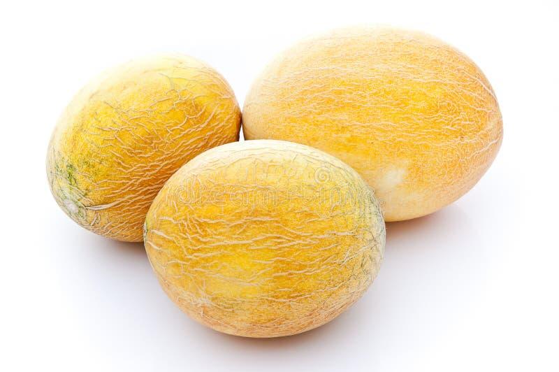 Kantalupe-Melone lizenzfreie stockfotografie