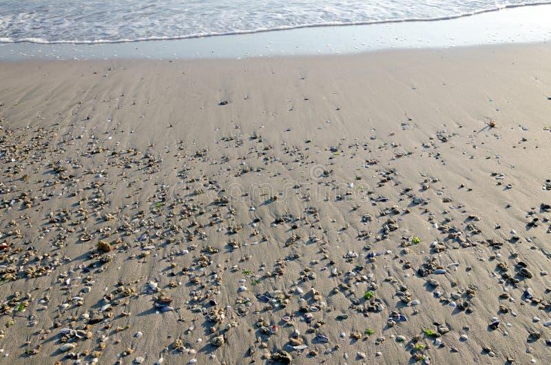 Kanten av vattnet och tömmer sandstranden med små kiselstenar och snäckskal royaltyfri foto