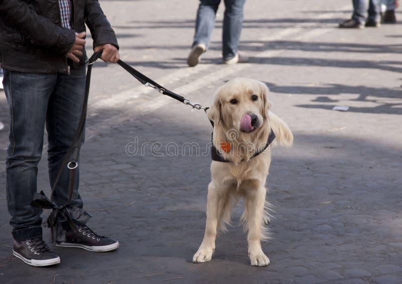 Kantjusterad bild av den stiliga unga mannen med labrador utomhus royaltyfria bilder