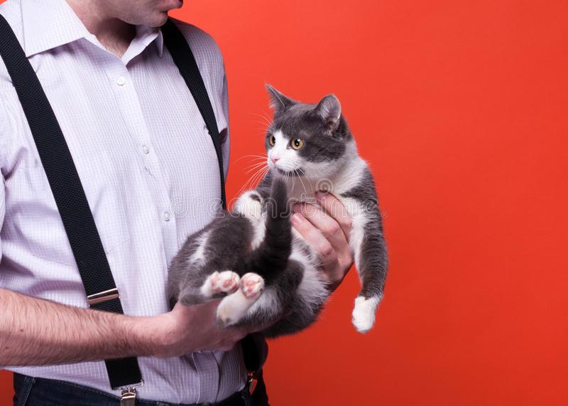 Kantjusterad sikt av mannen som rymmer gulliga grå färger med den vita katten arkivfoto