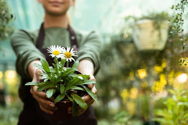 Kantjusterat foto av en växt för kvinnaträdgårdsmästareinnehav royaltyfri bild