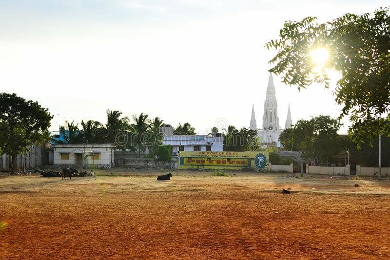 Kanyakumari, Tamil Nadu, India - January, 2017: Cows lies on orange dirt in a park. Old catholic church on the background. Sun stock photo