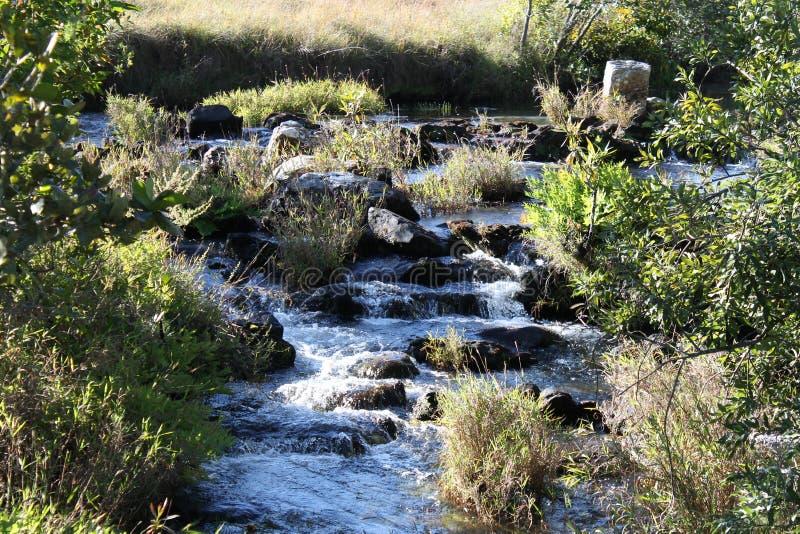 Kaombe flod Zambia royaltyfria bilder