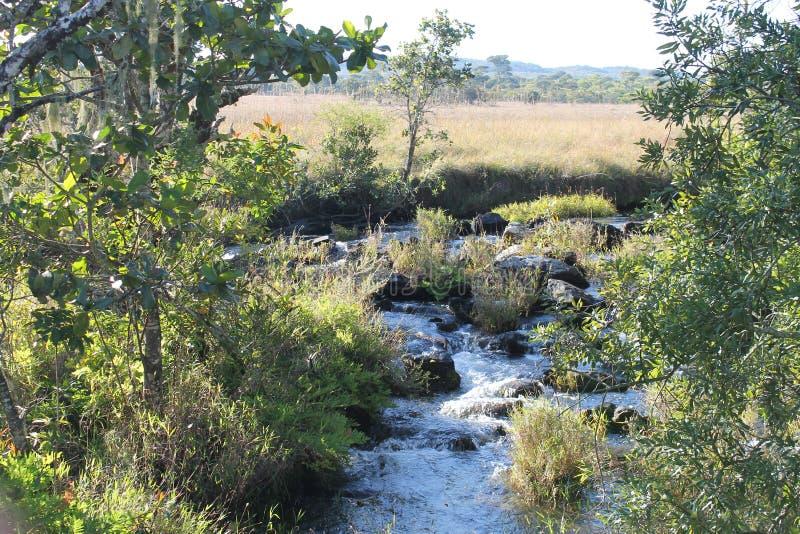Kaombe flod Zambia royaltyfria foton