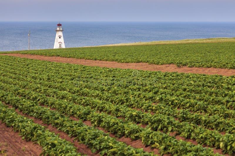 Kap Tryon-Leuchtturm auf Prinzen Edward Island lizenzfreie stockfotografie