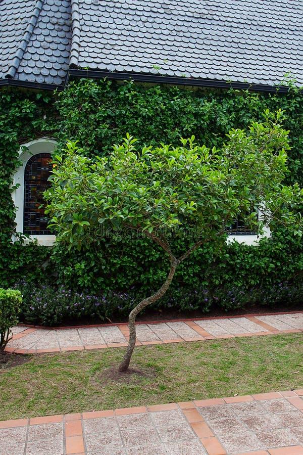 Kapell med gröna träd fotografering för bildbyråer