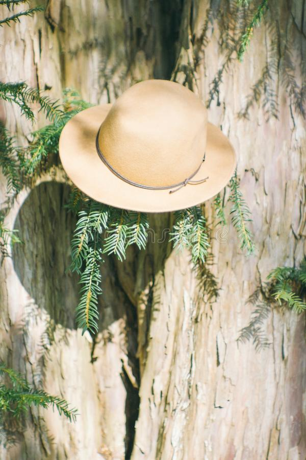 Kapelusz na drzewie fotografia royalty free