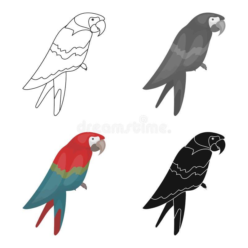 Kapern Sie ` s die Papageienikone in der Karikaturart lokalisiert auf weißem Hintergrund Kapert Vektorillustration des Symbols au stock abbildung