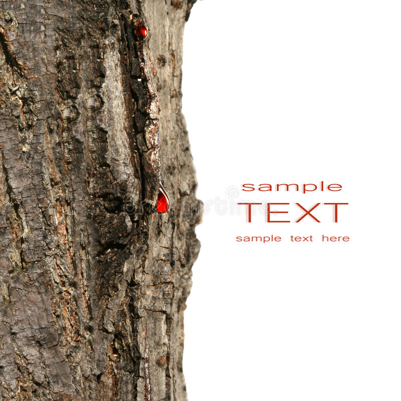 kapiący krwi drzewo zamknięty kapiący ilustracja wektor