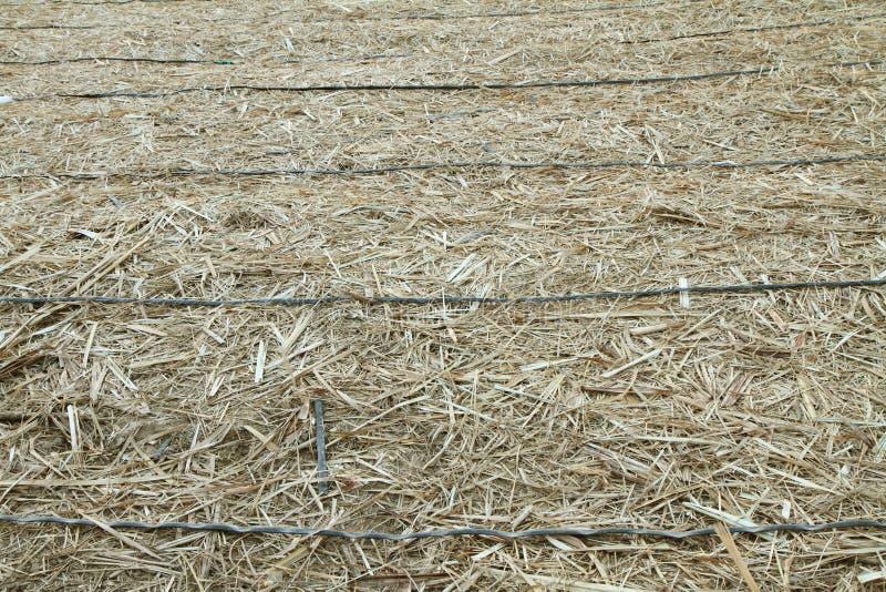 Kapinos irygaci drymba w starej trzcinie cukrowa obrazy stock