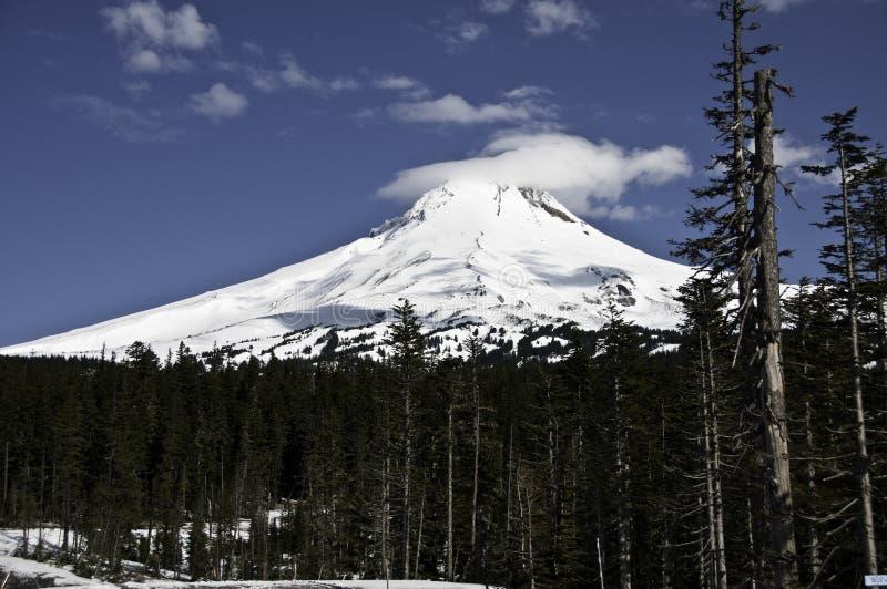kapiszon góra zdjęcie stock