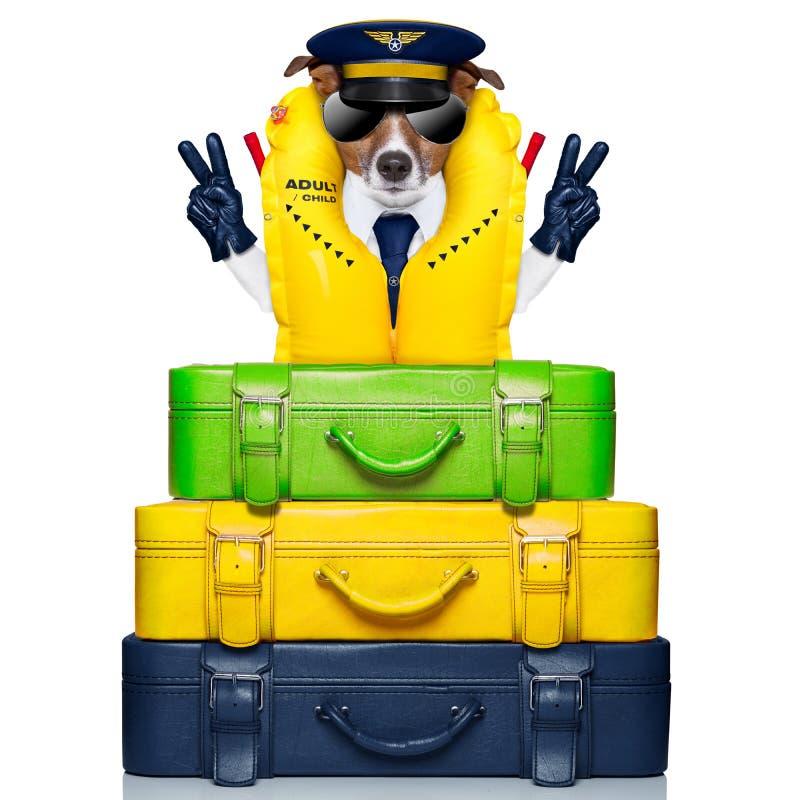 Kapitanu pies obraz royalty free
