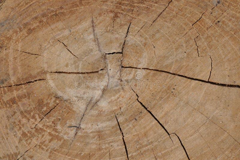 Kapitel des Baumkabels lizenzfreie stockfotos