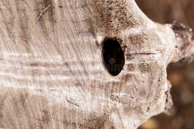 Kapitel eines alten Baums stockbilder