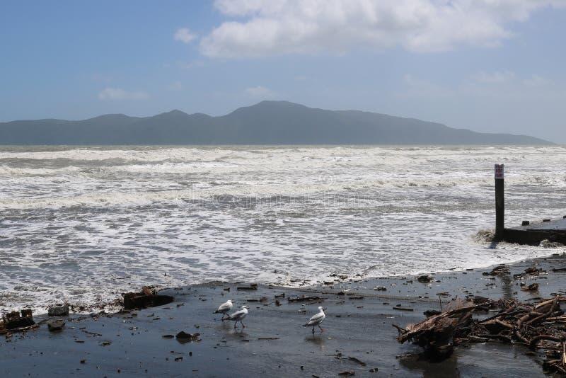 Kapiti wyspa od Raumati plaży, Nowa Zelandia obrazy royalty free