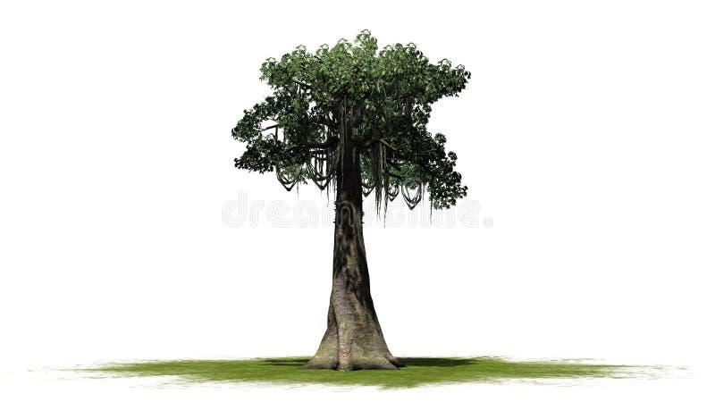 Kapok tree - isolated on white background. Single Kapok tree in front on a white background stock image