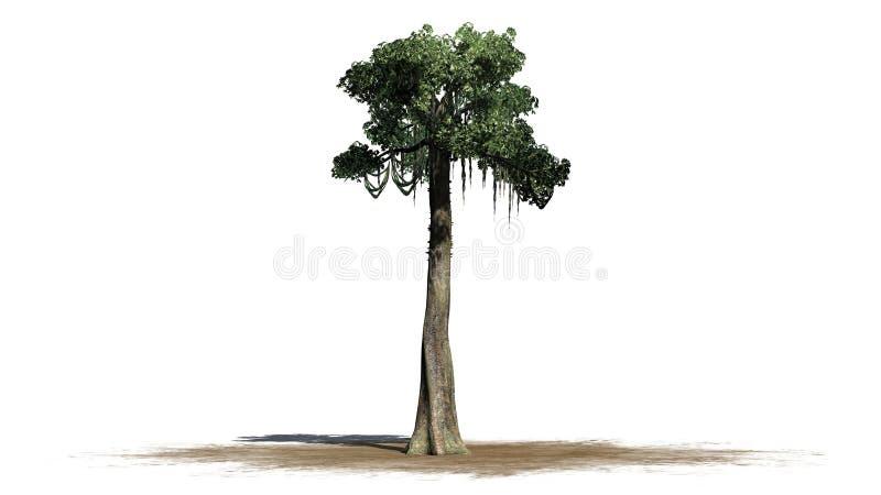 Kapok tree - isolated on white background. Single Kapok tree in front on a white background stock photo