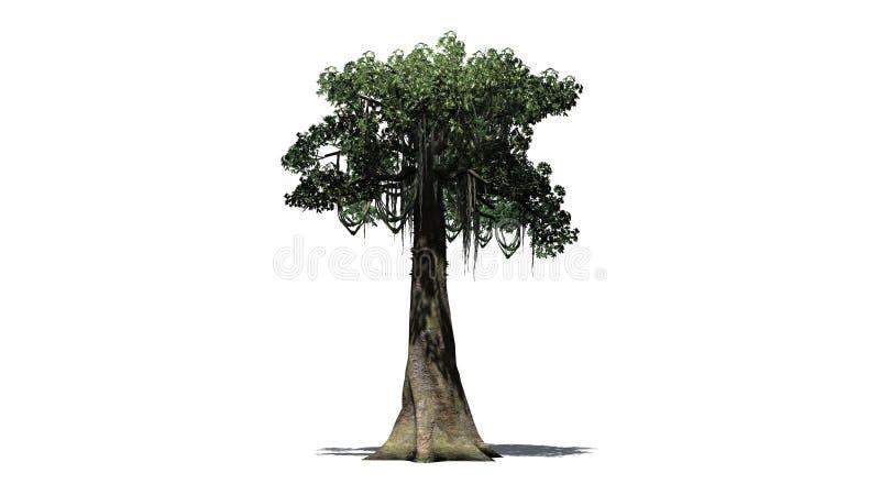 Kapok tree - isolated on white background. Single Kapok tree in front on a white background royalty free stock photo