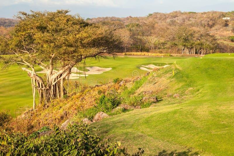 Kapok Tree. Large Kapok tree on a golf course royalty free stock photos