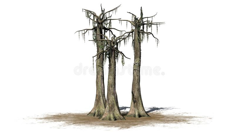 Kapok trees in the winter - isolated on white background. Several different Kapok trees in the winter in front on a white background vector illustration
