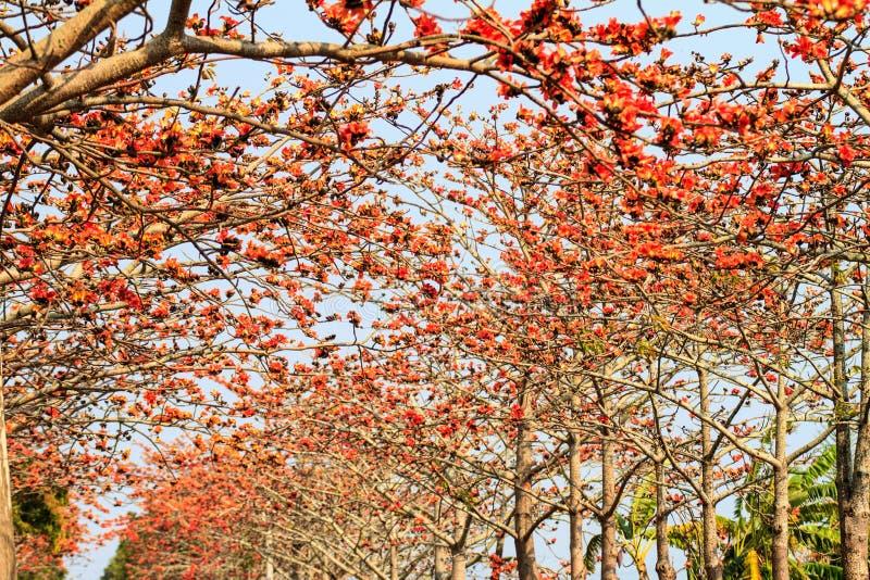 Kapoka sezon, linchu rezerwuar w Tainan, Tajwan fotografia royalty free