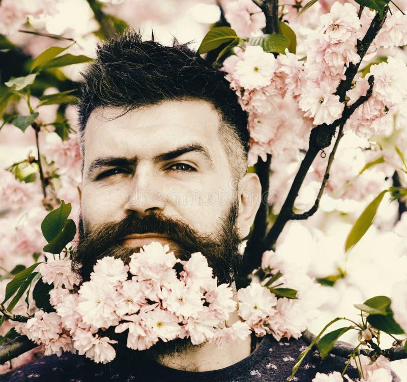 Kapper en haarverzorgingconcept De mens met baard en de snor op sluw gezicht dichtbij roze bloemen, sluiten omhoog Gebaarde mens  royalty-vrije stock foto's