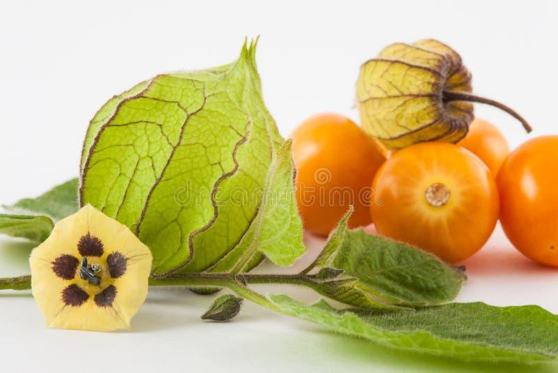 Kapstachelbeerfrucht, -blume und -kelch Physalis peruviana stockbild